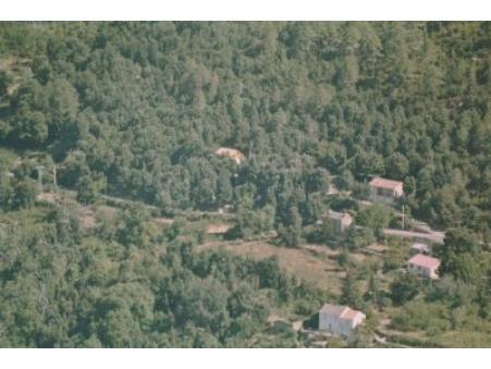 location maison gavignano