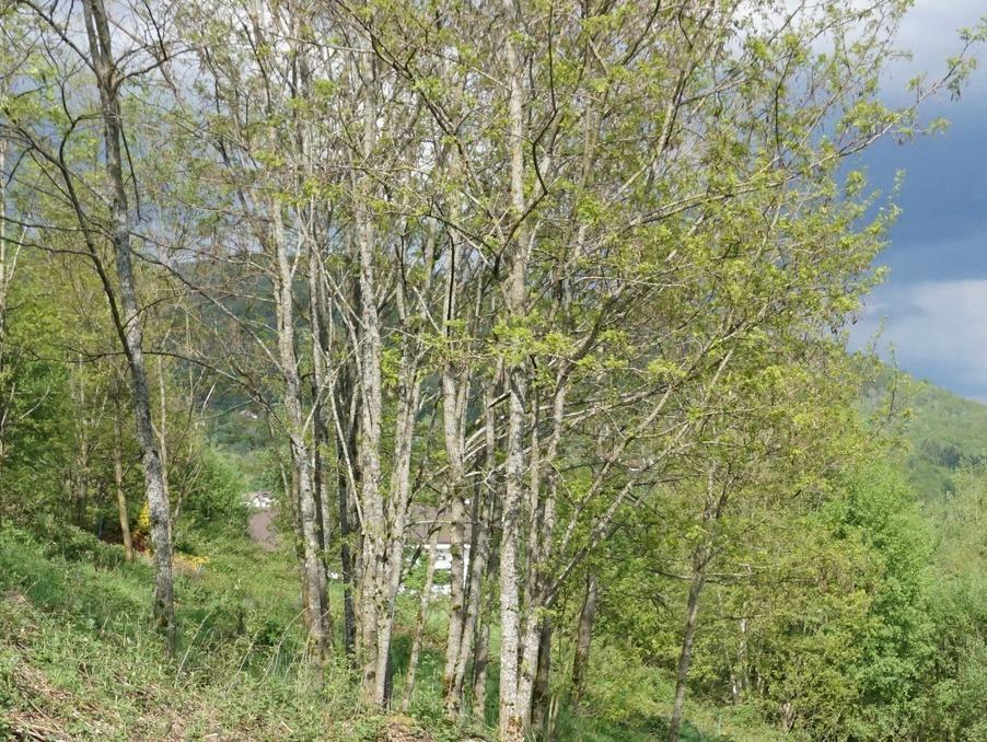 Vente Terrain  SAULXURES SUR MOSELOTTE 37 600 €