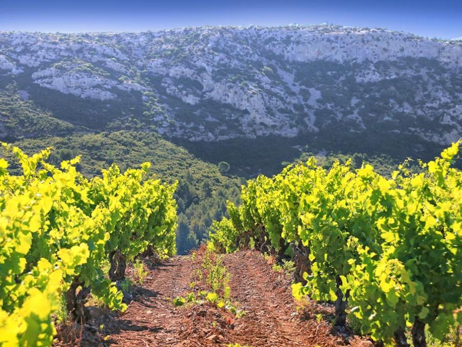 Vente Maison  avec jardin  VILLESEQUE DES CORBIERES 2 450 000 €