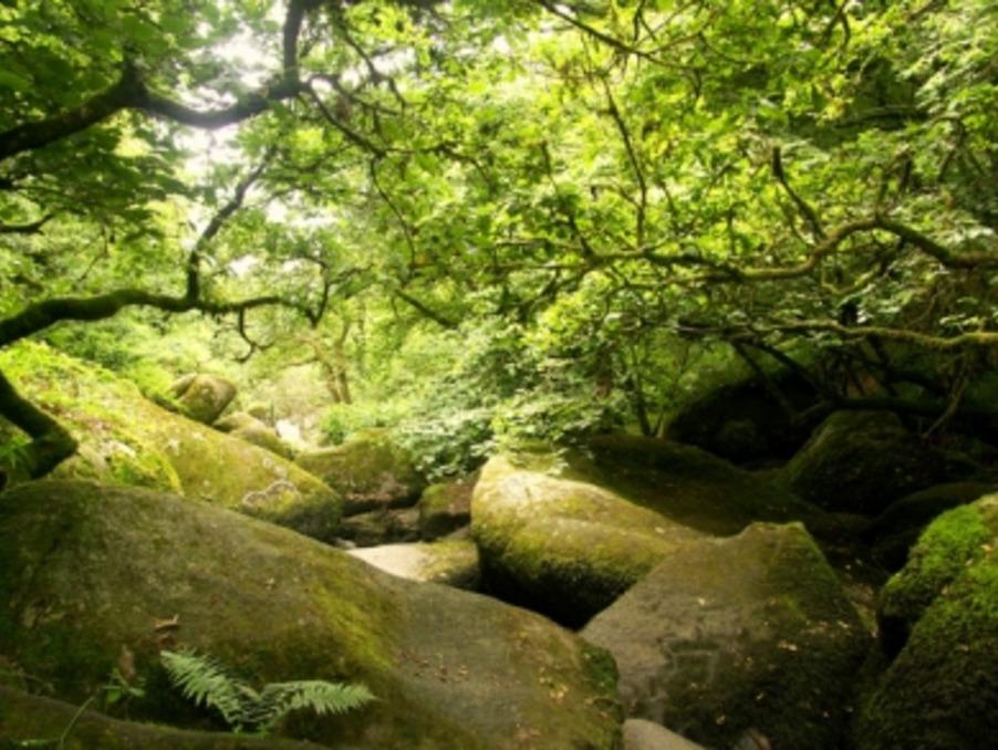 Location saisonniere Gite Mur de bretagne 3