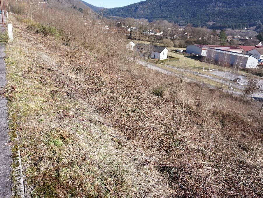 Vente Terrain SAULXURES SUR MOSELOTTE 24 469 €